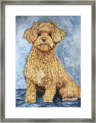 Chase The Maltipoo Framed Print