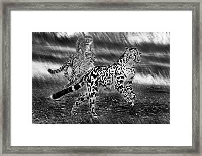 Chasing Mum Framed Print