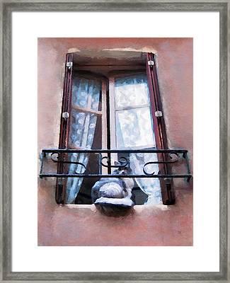 Chat Bleu Dans La Fenetre Rose Framed Print