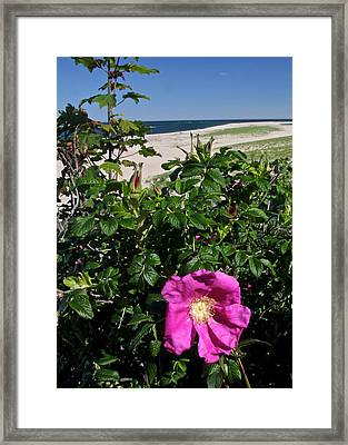 Chatham Flower Framed Print