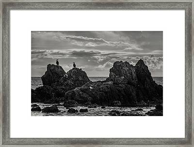 Chatting On Rocks Framed Print