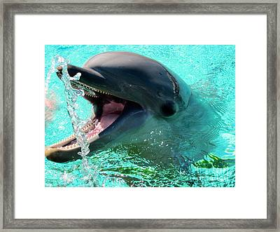 Chatty Dolphin Framed Print by Vi Brown
