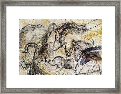 Chauvet Horses Aurochs And Rhinoceros Framed Print