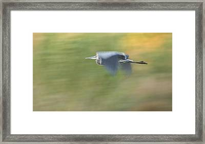 Check Me Out Framed Print by Charlie Osborn