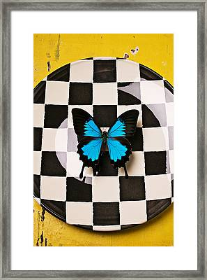 Checker Plate And Blue Butterfly Framed Print