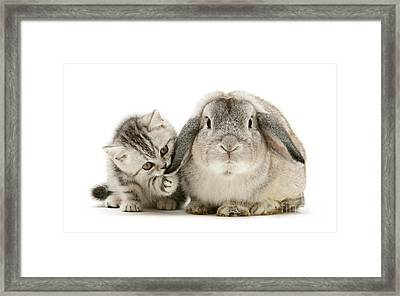 Checking For Grey Hares Framed Print