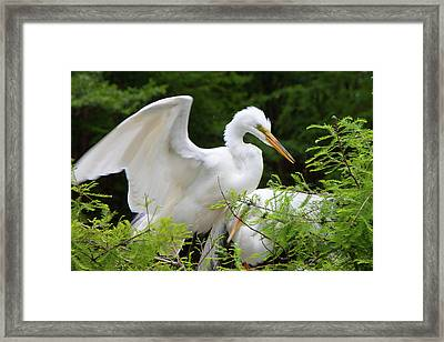 Checking-in Framed Print
