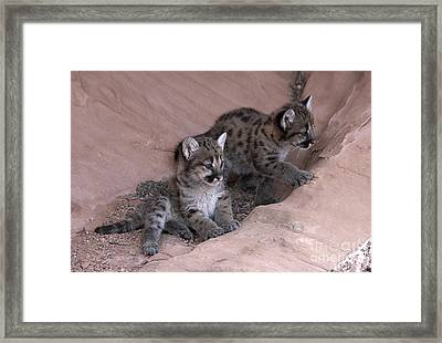 Checking It Out Framed Print by Sandra Bronstein