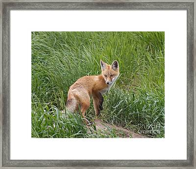 Checking The Perimeter Framed Print by Royce Howland