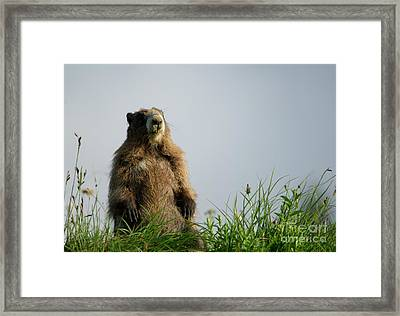 Checking The View Framed Print by Mike Dawson