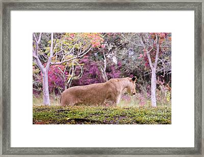 Checking Things Out Edition 2 Framed Print by Judy Kay