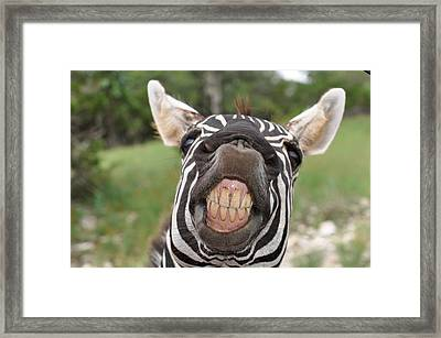 Cheeese Framed Print by Teresa Blanton