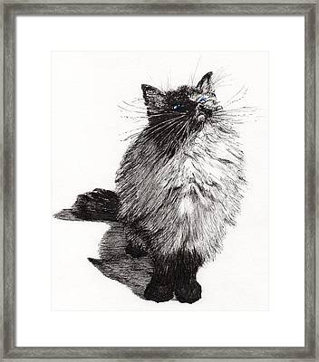 Cheekie Baby Framed Print by Vincent Alexander Booth