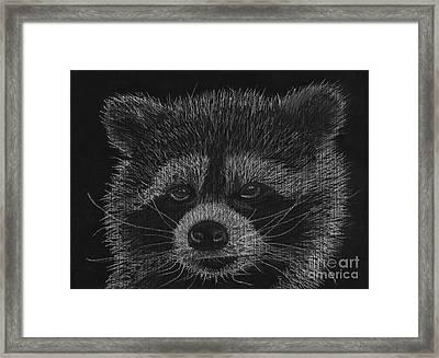 Cheeky Little Guy - Racoon Pastel Drawing Framed Print