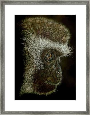 Cheeky Monkey Framed Print