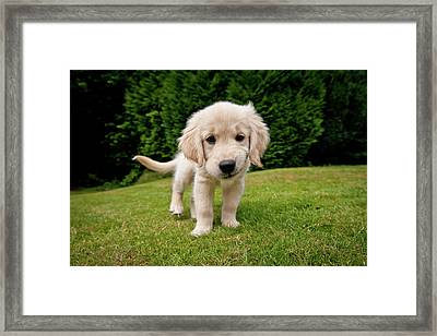 Cheeky Pup Framed Print by Richard Downs