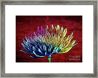 Cheerful 147 Framed Print