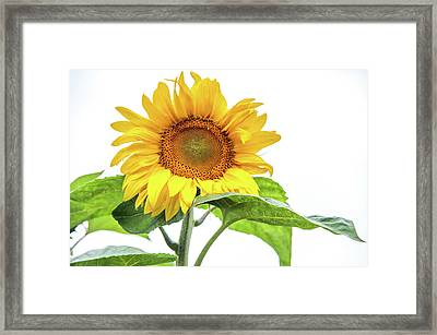 Framed Print featuring the photograph Cheerful Flower Cheerful Mood by Jenny Rainbow