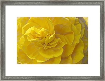 Cheerful Framed Print