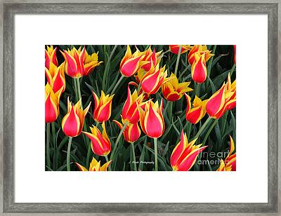 Cheerful Spring Tulips Framed Print