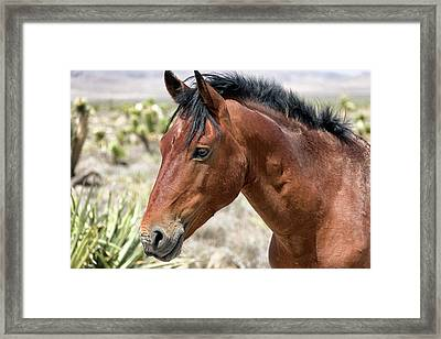 Framed Print featuring the photograph Cheers Where Everybody Knows Your Name by Michael Rogers