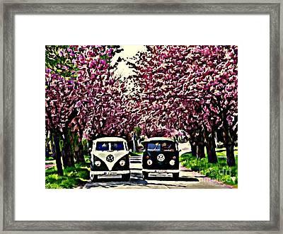 Cheery Blossom Framed Print by S Poulton