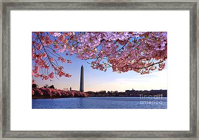 Cheery Cherry Dc Framed Print
