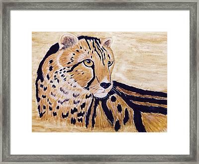 Cheeta Framed Print