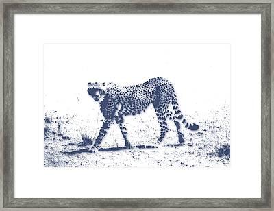 Cheetah 2 Framed Print
