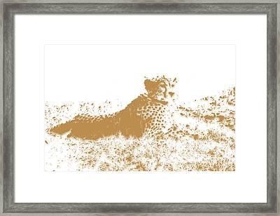 Cheetah 4 Framed Print