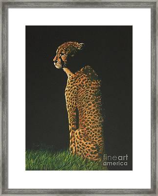 Cheetah At Sunset Framed Print