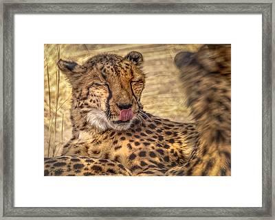 Cheetah Cattitude Framed Print