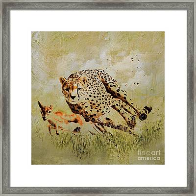 Cheetah Chasing  Framed Print by Gull G