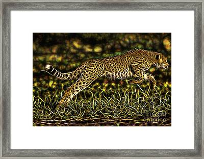 Cheetah Collection Framed Print