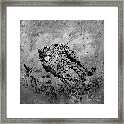 Cheetah Hunting Deer  Framed Print by Gull G