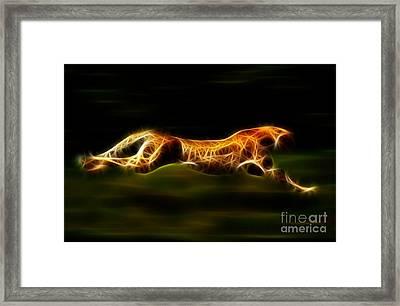 Cheetah Hunting His Prey Framed Print