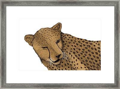 Cheetah Framed Print by Karl Addison