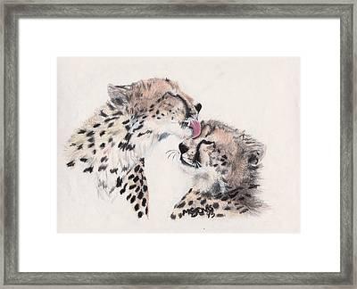 Cheetah Love Framed Print