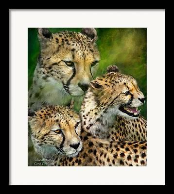 Cheetah Mixed Media Framed Prints