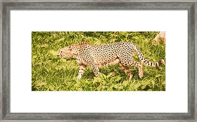 Cheetah On The Hunt Framed Print by Pati Photography