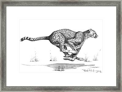 Cheetah On The Kill Framed Print by Bob Patterson