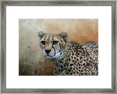 Cheetah Portrait Framed Print