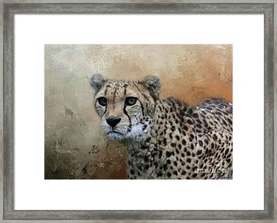 Cheetah Portrait Framed Print
