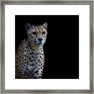 Cheetah Portrait Framed Print by Martin Newman