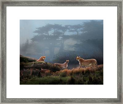 Cheetahs In The Mist Framed Print