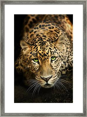Cheetaro Framed Print