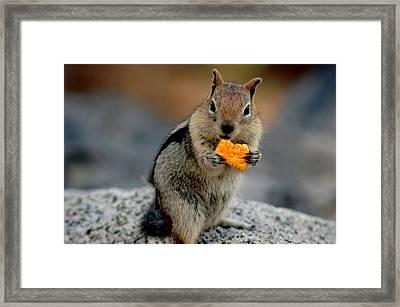 Cheez It Chipmumk Framed Print by LeeAnn McLaneGoetz McLaneGoetzStudioLLCcom