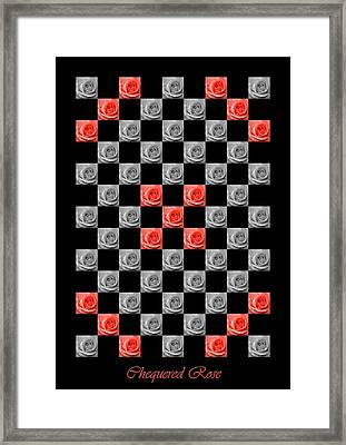Chequered Rose Framed Print