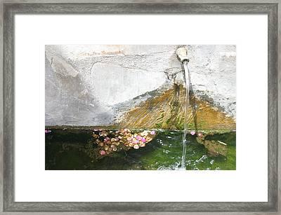 Cherin 7 Framed Print by Jez C Self