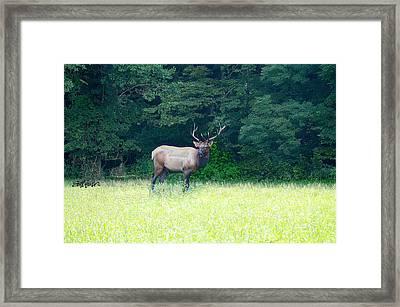 Cherokee Elk Framed Print by Seth Weaver